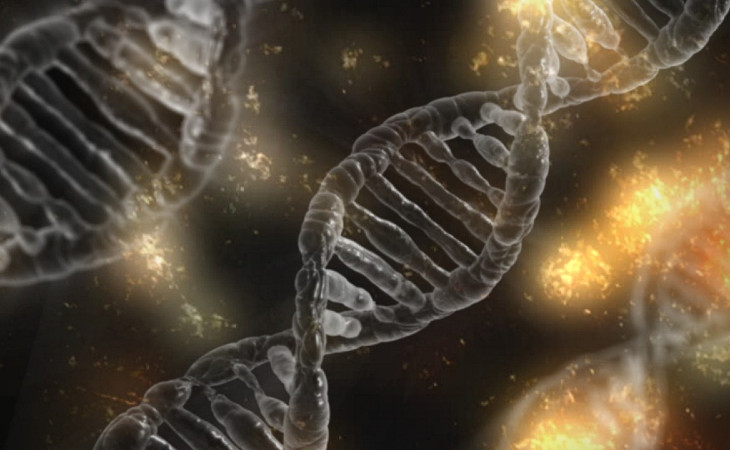 Biology: Introduction to DNA